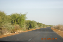 Assalaya roadside forests