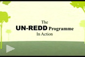 un-redd_prog_in_action