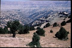 Juniper forests, Subzac pass - Afghanistan 2002 © UNEP