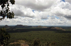 Miombo_forests1